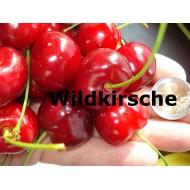 Wildkirsche