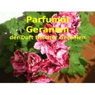 Geranien - Geranium Parfumöl