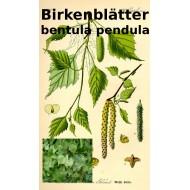 Birkenblätter Birkenblättertee Betula pendula ph. Eur