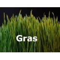 frisches Gras