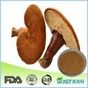 Reishi (Ganoderma lucidum) Extract Glänzender Lackporling