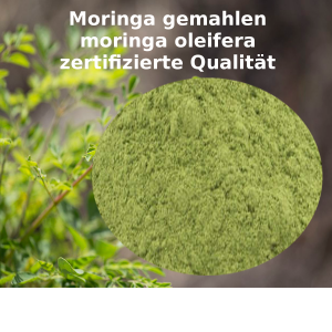 Moringa gemahlen Pulver moringa oleifera