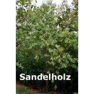 Sandelholz