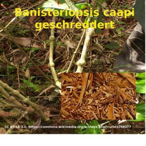 Banisteriopsis caapi geschreddert aus Peru lose abgepackt