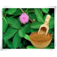 Jurema Preta Mimosa Hostilis  Premium gemahlen