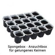 Spongepott Aufzuchtbox - Keimbox die einfache Box für Ihre Anzucht