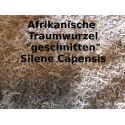Afrik. Traumwurzel geschnitten