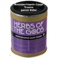 Banisteriopsis caapi - Trueno ganze Rebe 50 Gramm Traumkraut