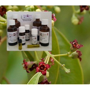 Amyrisöl Sandelholz westindisch 100% ätherisches Öle von Mäc Spice