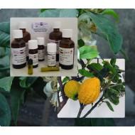 """Citrus Medica Zitronatzitrone 100% reines ätherische Öle von """"Mäc Spice"""""""