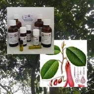 Gurjun Balsam / Gurjunöl 100% naturreines ätherisches Öl von Mäc Spice
