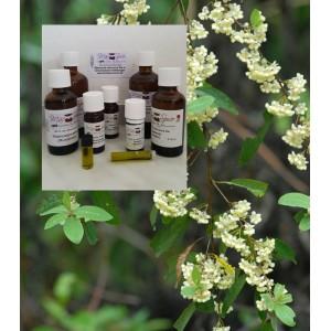 Litsea Cubeba 100% ätherisches Öl von Mäc Spice