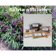 Salbeiblätter geschnitten salvia officialis Salbei Tee