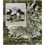 Baummoosöl / Absolue 100% naturreines ätherisches Öl von Mäc Spice