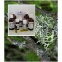 Eichenmoosöl / Absolue 100% naturreines ätherisches Öl von Mäc Spice