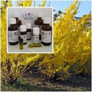 Forsythienöl Goldglöckchenöl 100% naturreines ätherisches Öle Mäc Spice