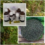 Selleriesamenöl Sellerieöl 100% naturreine ätherisches Öl von Mäc Spice