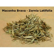 Macohna Brava (Zornia latolia)