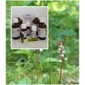 """Wintergrünöl naturrein Top Massageöl 100% ätherische Öle von """"Mäc Spice"""""""