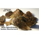 Chaliponga Blätter  Diploterys Cabrerana