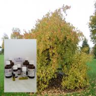 """Styrax Öl 100% ätherische Öle """"Mäc Spice"""""""