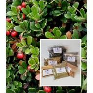 Bärentraubenblätter ganz Arctostaphylos uva-ursi Mäc Spice