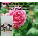 Mairosen Öl Absolute keine Verdünnung Rosa × centifolia Mäc Spice naturrein