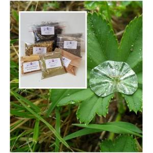 Frauenmantelkraut geschnitten Alchemilla vulgaris Mäc Spice
