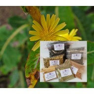 Giftlattich geschn. Wild Lettuche Gift - Lattich Mäc Spice
