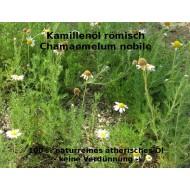 Kamillenöl römische Kamille Chamaemelum nobile naturreines ätherisches Öl