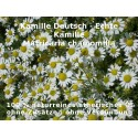 Kamillenöl deutsche Kamille Matricaria chamomilla naturreines ätherisches Öl
