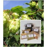 Hopfenblüten ganz Hopfentee neue Ernte 100% Natur von Mäc Spice