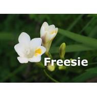 Freesie
