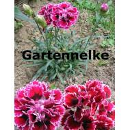 Gartenneklke