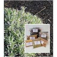 Lavendelblüten indisch Lavandin für Tee oder Duftkissen