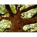 Neemöl - Niemöl Azadirachta indica reines pflanzliches Neemöl