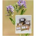 Luzerne Kraut gemahlen  1A Alfalfa Medicago sativa Mäc Spice Natur