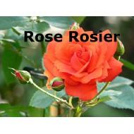 Rose Rosier