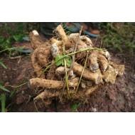 Yams Wurzel geschnitten 1A Qualität Dioscorea spec Mäc Spice