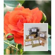 Rosenblütenblätter getrocknet rot  Gewürze / Räucherung