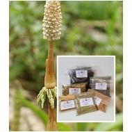 Schachtelhalmkraut geschnitten  Equisetum arvense L. Mäc Spice