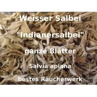 Weisser Salbei Salvia apiana bester Indianersalbei White sage lose