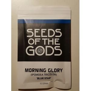 """Morning Glory """"Blue Star"""" (Ipomoea tricolor) Trichterwinde 10 GrammSamen"""