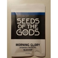 "Morning Glory ""flying saucer"" (Ipomoea tricolor) Trichterwinde 10 GrammSamen"