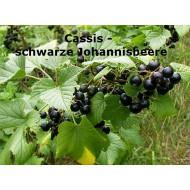 Cassis - schwarze Johannisbeere