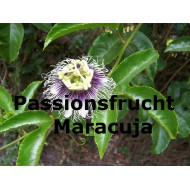 Passionsfrucht Maracuja