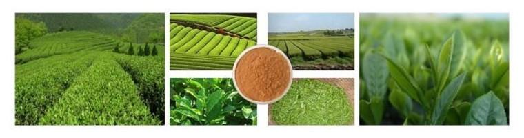 Extrakte von Kräuter und Naturprodukten
