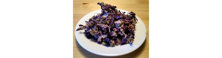 Kräuter für Tee - Teekräuter