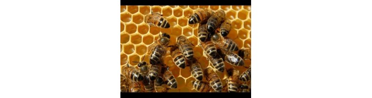 Bienenprodukte / Propolis, Wachs und Co.